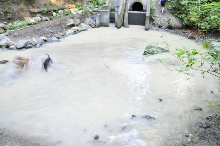 still milky byrne creek