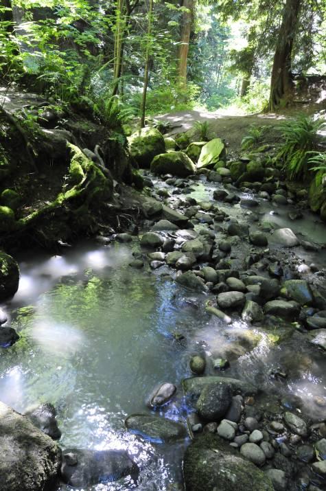 MIlky Byrne Creek