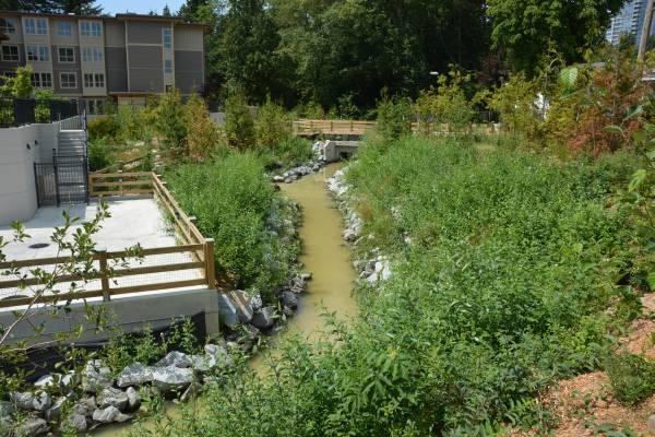 Sediment in Byrne Creek
