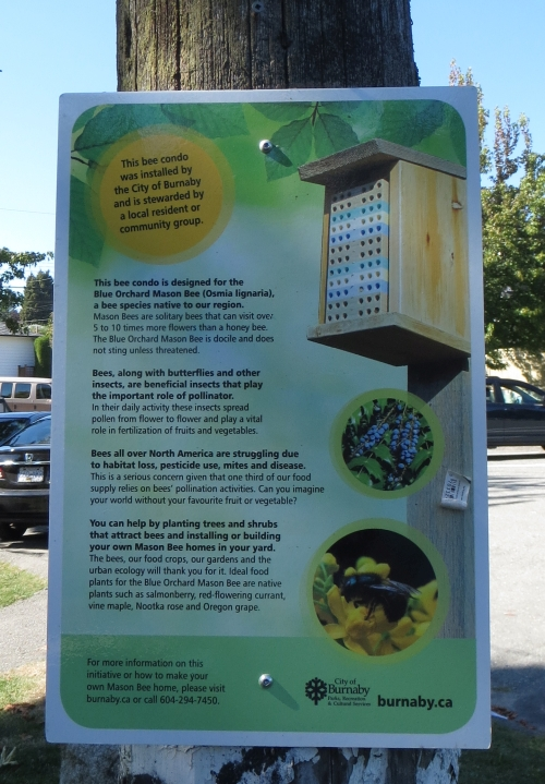 bee_condo_destroyed_burnaby_3_20140913
