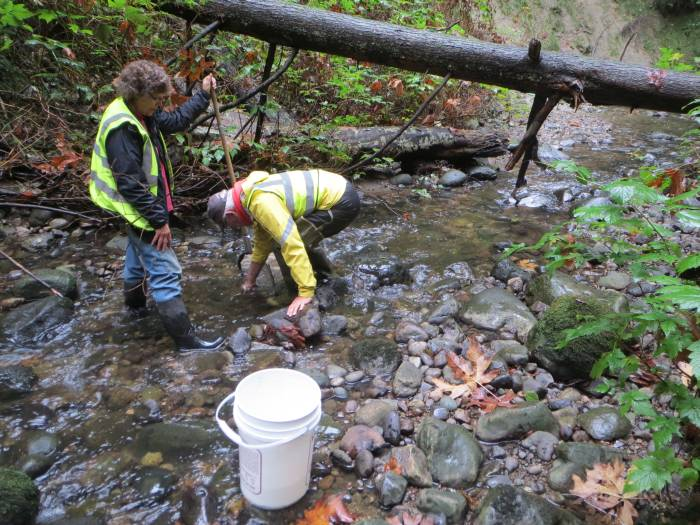 byrne_creek_bug_sampling_20141016