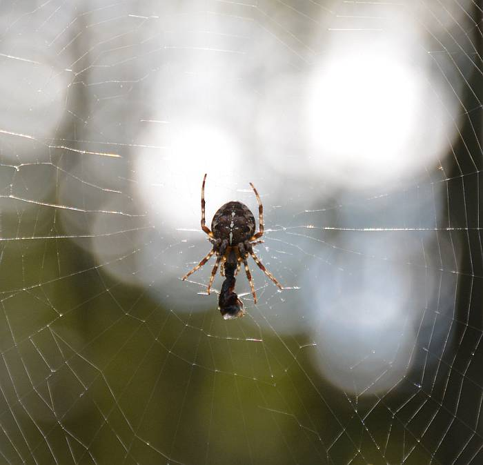 byrne_spider_20141019