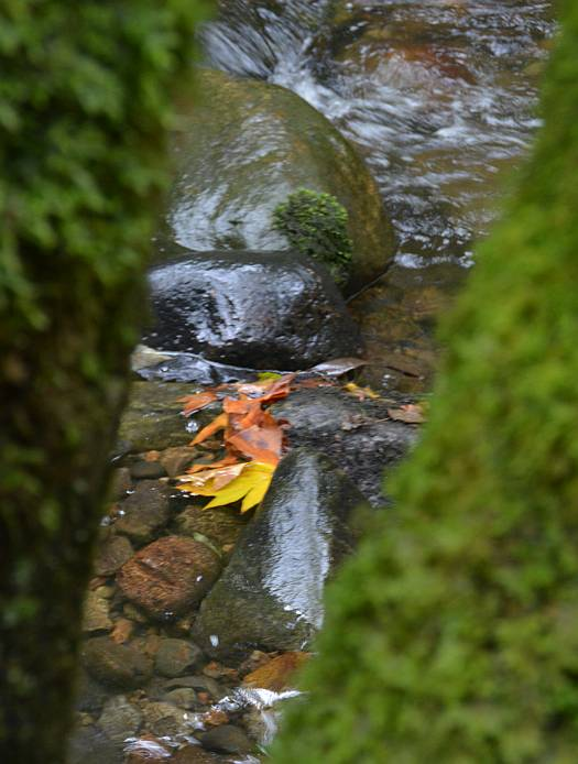 cipywnyk_byrne_creek_autumn_colours_12_20141015