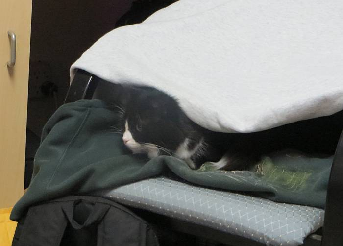 cat in sweatshirt cave