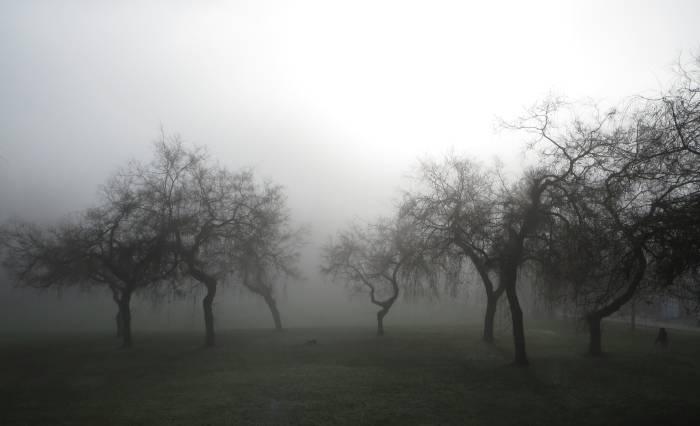 foggy Ron McLean Park Burnab;y BC