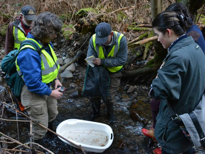 Byrne Creek Fish Survey March 8, 2015