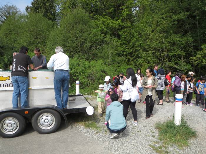 Byrne Creek Burnaby chum fry release