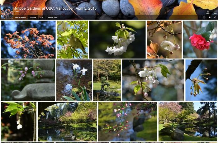 Nitobe Garden UBC