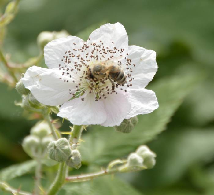 bee colony farm