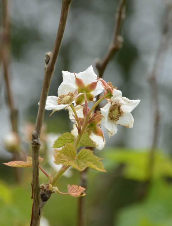 blossoms colony farm
