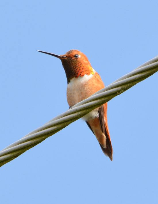 hummingbird near jordan river bc