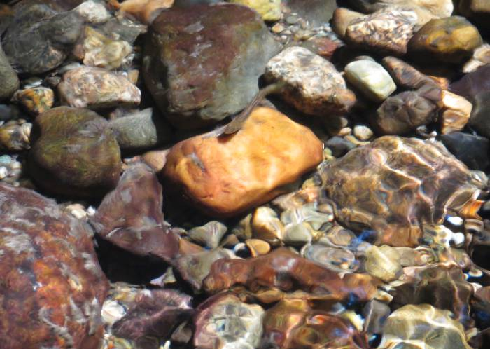 salmon fry, dappled sun and water