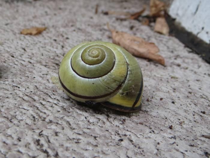 balcony snail