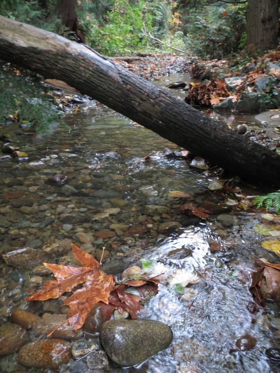 Byrne Creek