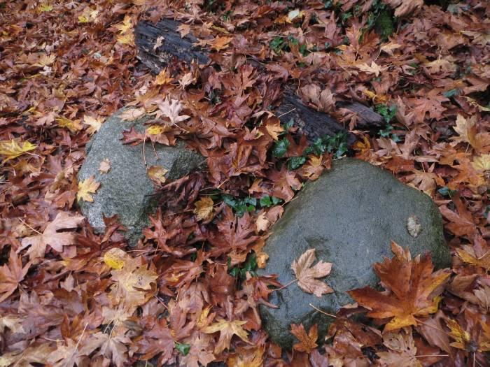 Byrne Creek leaves