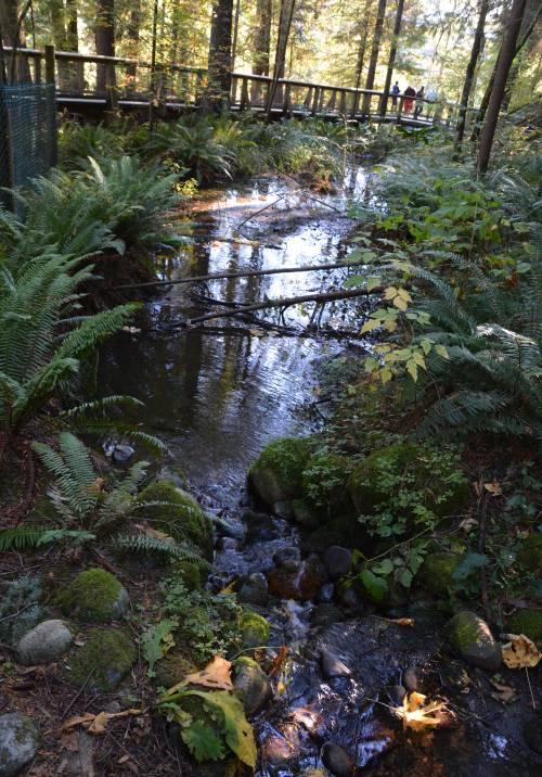 Pond Capilano Park