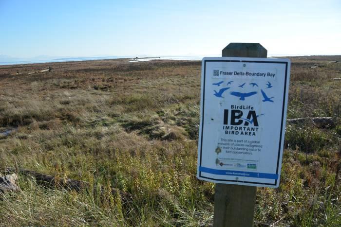 boundary bay bird area