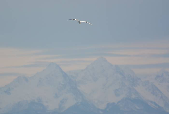 Gull Mountains White Rock BC