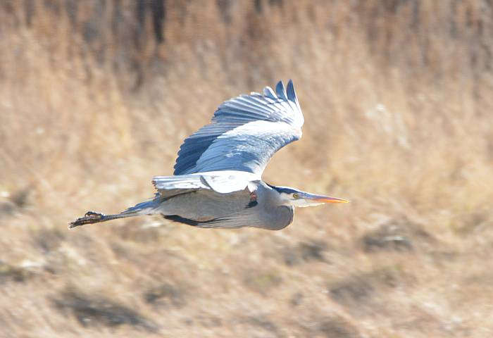 heron centennial beach tsawwassen