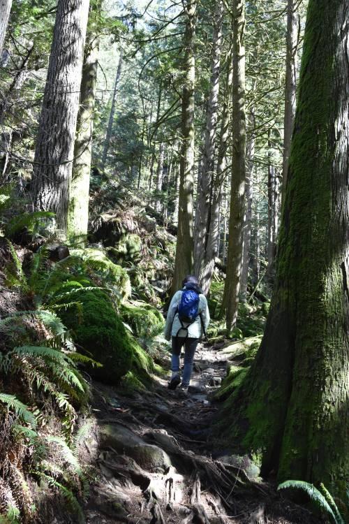 Minnekhada Regional Park forest trail