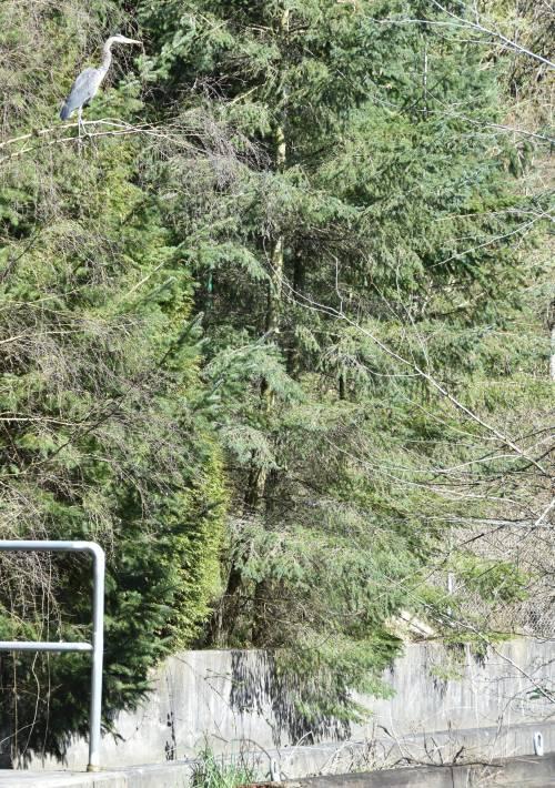 heron byrne creek burnaby