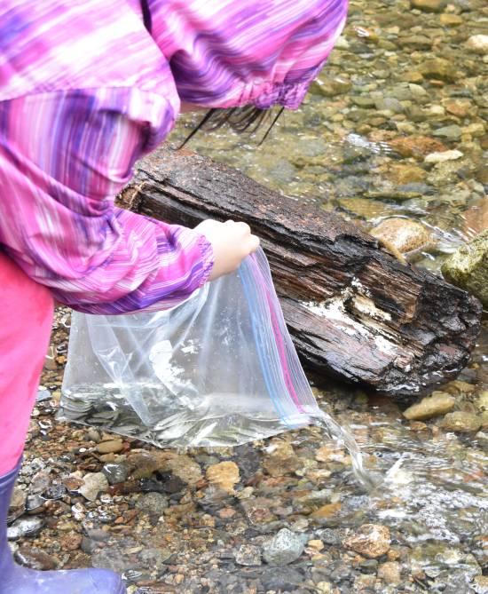 byrne creek chum fry release