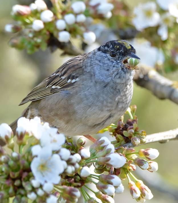 Stewart Heritage Farm sparrow