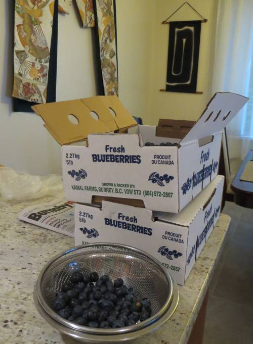 blueberry boxes