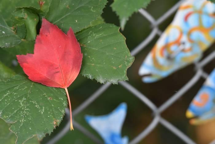 cipywnyk_autumn_stream_of_dreams_burnaby_foreshore_park_20160904