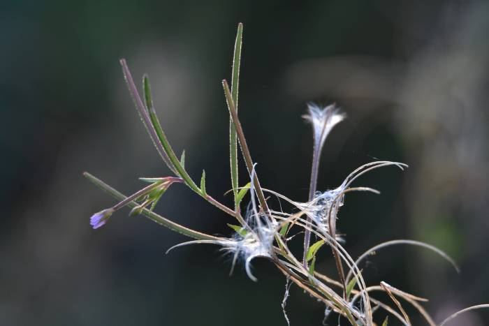cipywnyk_pond_plants_burnaby_foreshore_park_minus_2_20160904