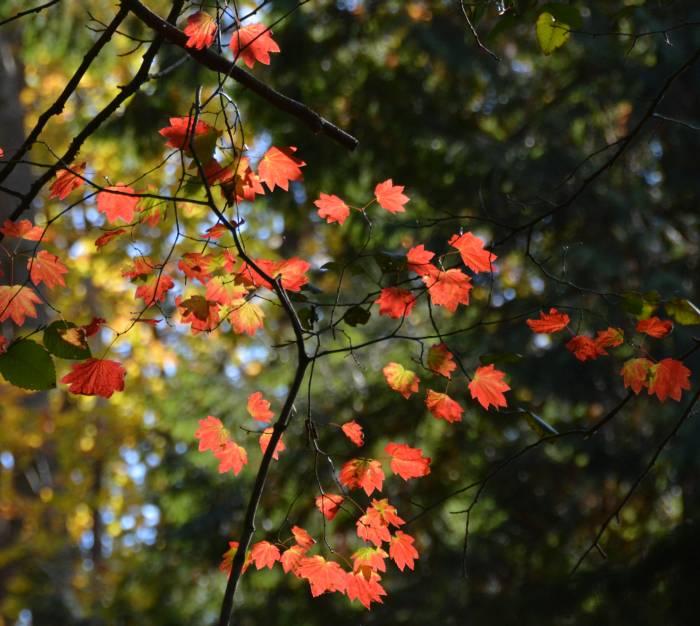 cipywnyk_byrne_fall_colours_17_20161012