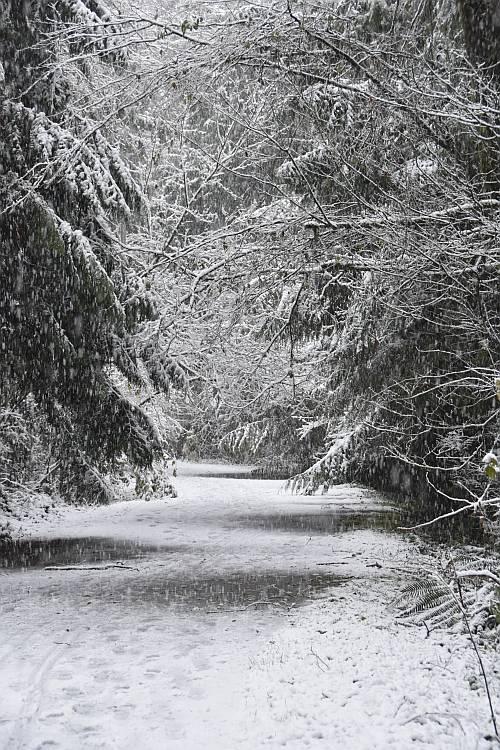 cipywnyk_burnaby_snow_byrne_creek_snow_12_20161204