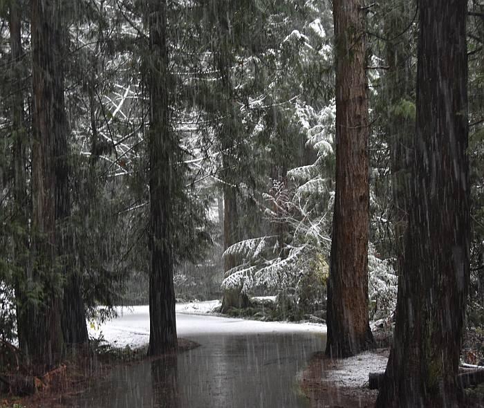 cipywnyk_burnaby_snow_byrne_creek_snow_13_20161204