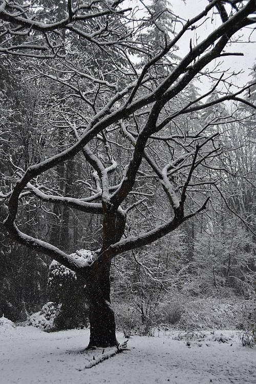 Snowy Byrne Creek walk