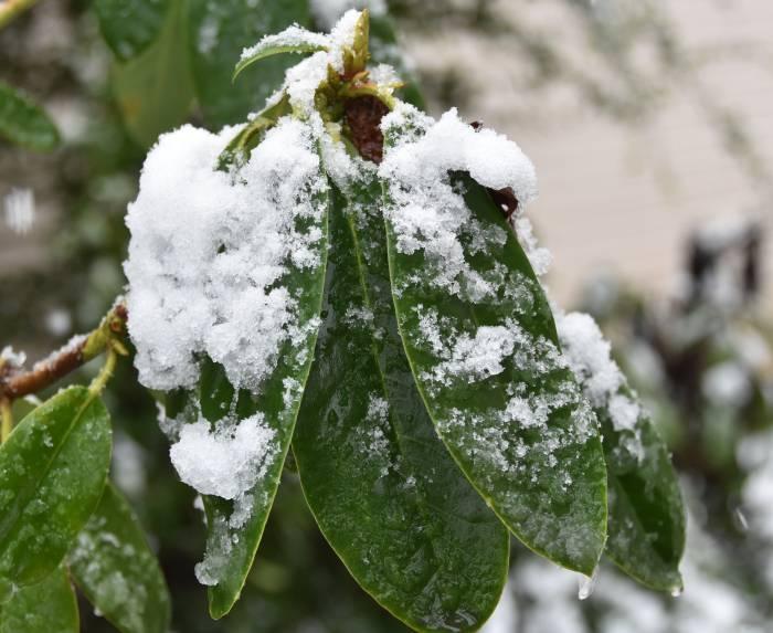 cipywnyk_burnaby_snow_byrne_creek_snow_1_20161204
