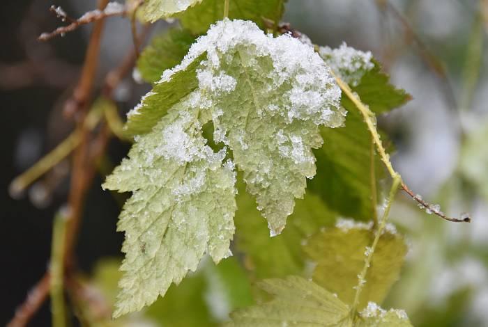 cipywnyk_burnaby_snow_byrne_creek_snow_2_20161204