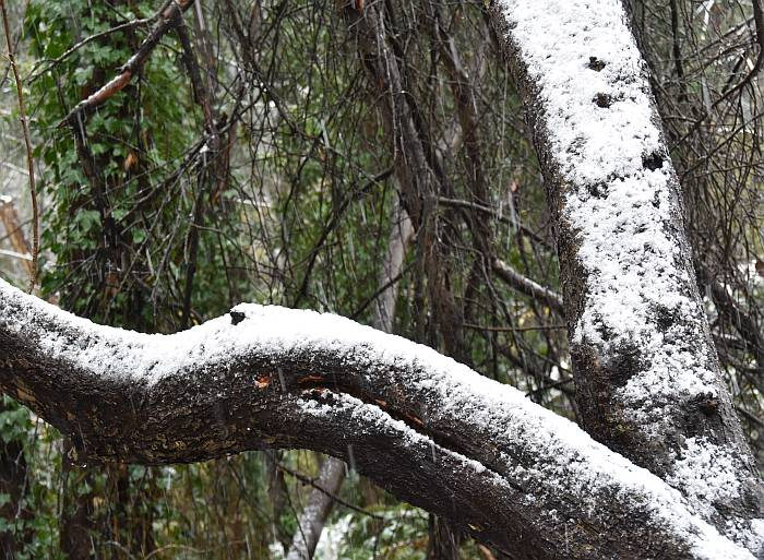 cipywnyk_burnaby_snow_byrne_creek_snow_5_20161204
