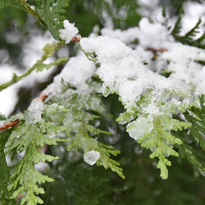 cipywnyk_burnaby_snow_byrne_creek_snow_6_20161204