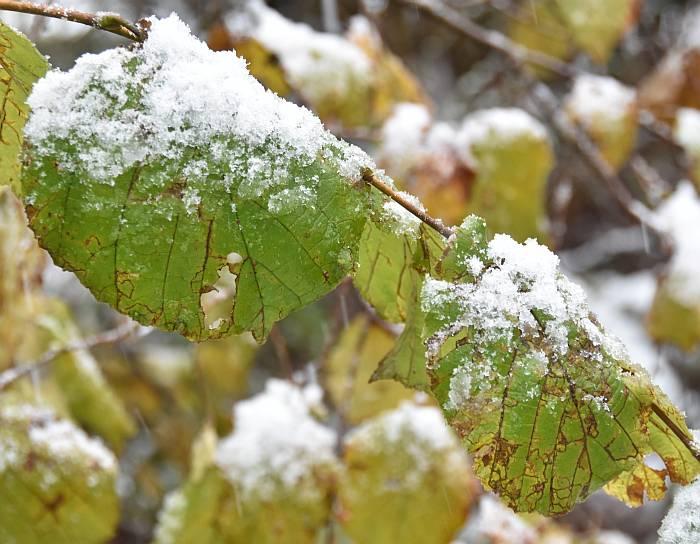cipywnyk_burnaby_snow_byrne_creek_snow_7_20161204