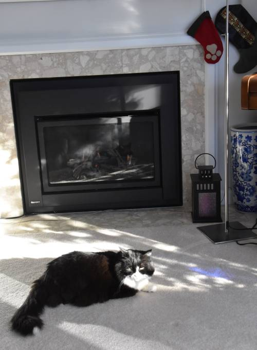 cat sun fireplace