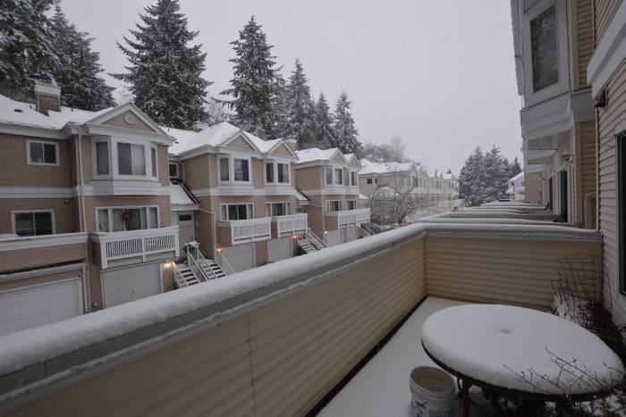 snowy south burnaby
