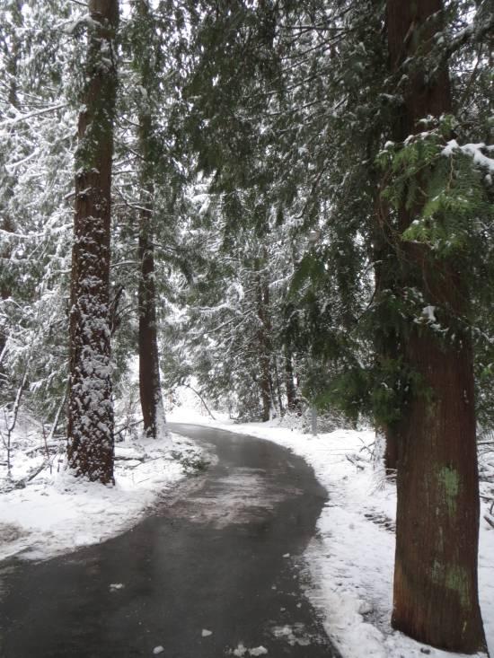 snowy byrne creek ravine park