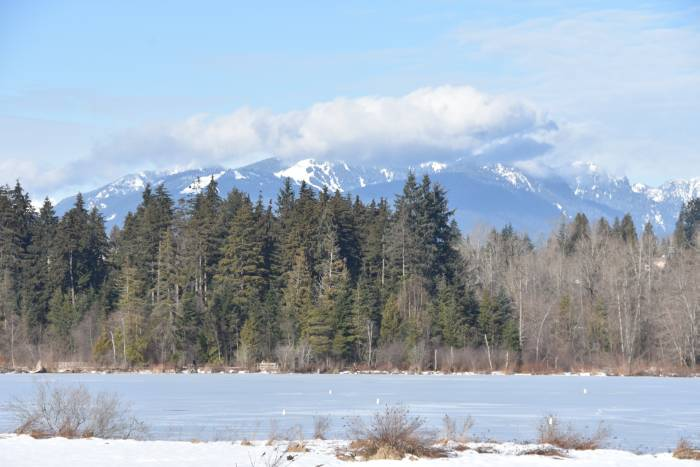snowy deer lake burnaby