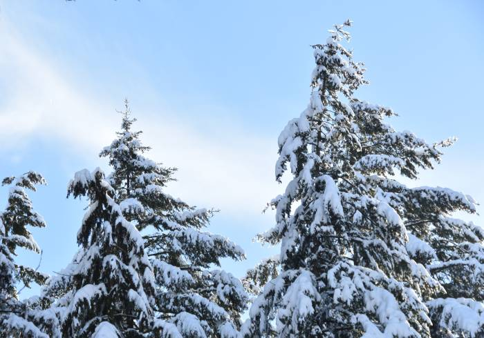 snow byrne creek ravine treeline