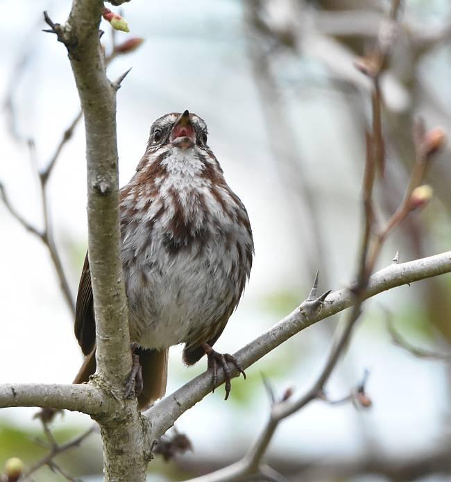Fraser Foreshore Park Birds