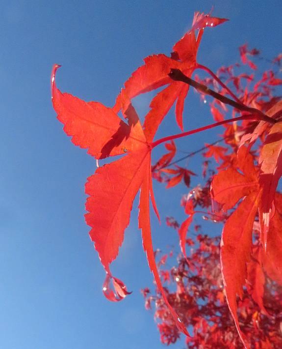 Byrne Creek autumn