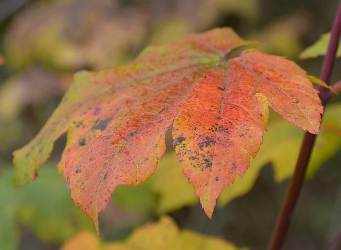 Soft Autumn Colors Byrne Creek