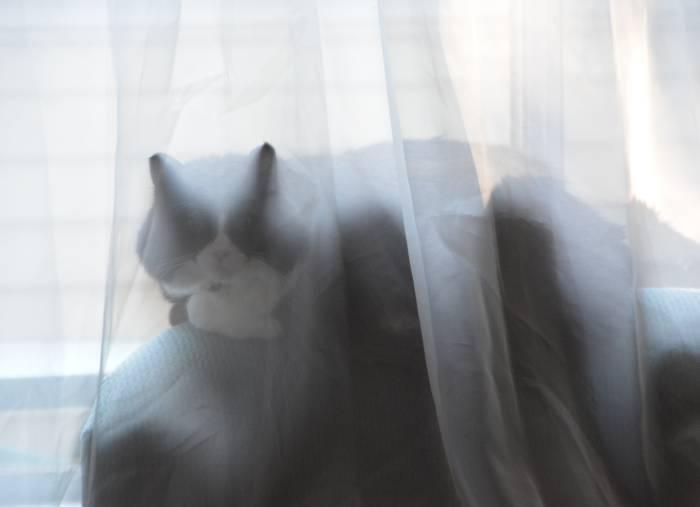 Choco Ghost Cat