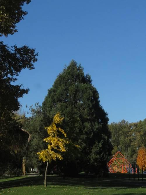 Burnaby Fraser Foreshore Park Autumn Colours