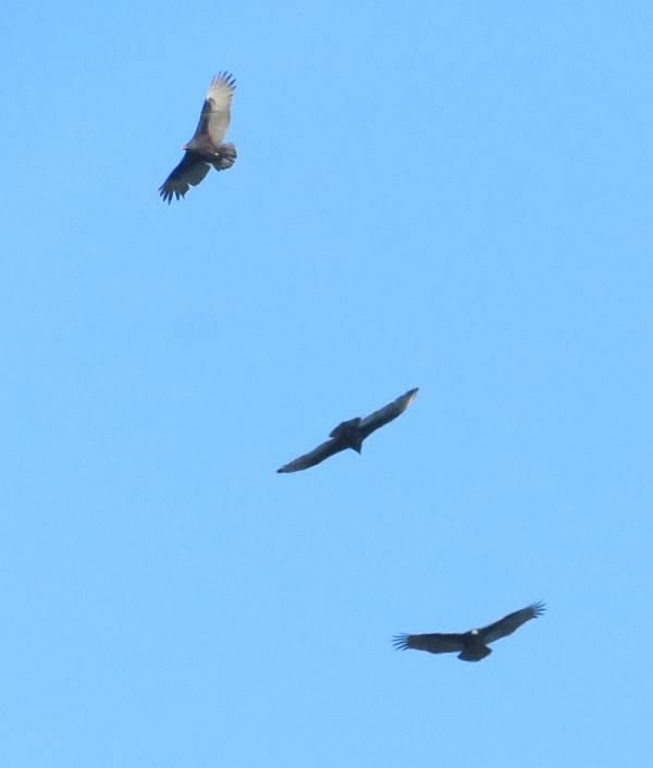 Fort Rodd Hill wildlife